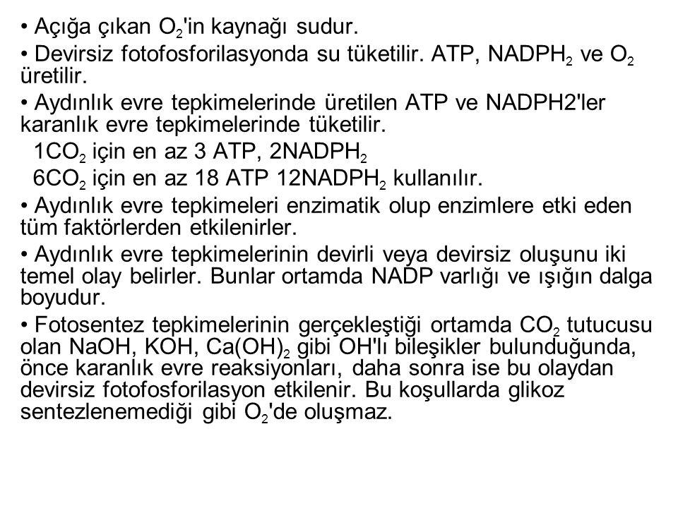 Açığa çıkan O 2 'in kaynağı sudur. Devirsiz fotofosforilasyonda su tüketilir. ATP, NADPH 2 ve O 2 üretilir. Aydınlık evre tepkimelerinde üretilen ATP