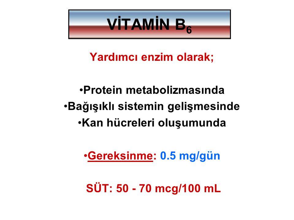 VİTAMİN B 6 Yardımcı enzim olarak; Protein metabolizmasında Bağışıklı sistemin gelişmesinde Kan hücreleri oluşumunda Gereksinme: 0.5 mg/gün SÜT: 50 -
