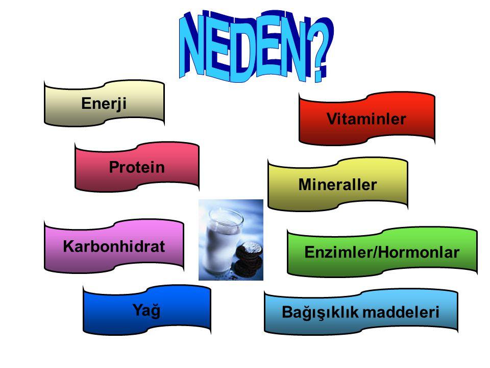 Enerji Protein Karbonhidrat Yağ Bağışıklık maddeleri Enzimler/Hormonlar Mineraller Vitaminler