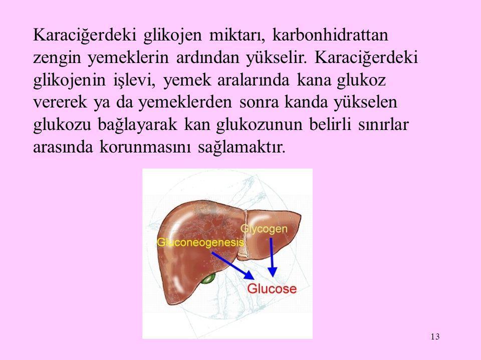 13 Karaciğerdeki glikojen miktarı, karbonhidrattan zengin yemeklerin ardından yükselir. Karaciğerdeki glikojenin işlevi, yemek aralarında kana glukoz