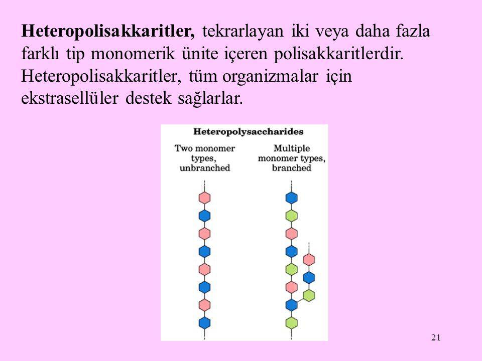 21 Heteropolisakkaritler, tekrarlayan iki veya daha fazla farklı tip monomerik ünite içeren polisakkaritlerdir. Heteropolisakkaritler, tüm organizmala