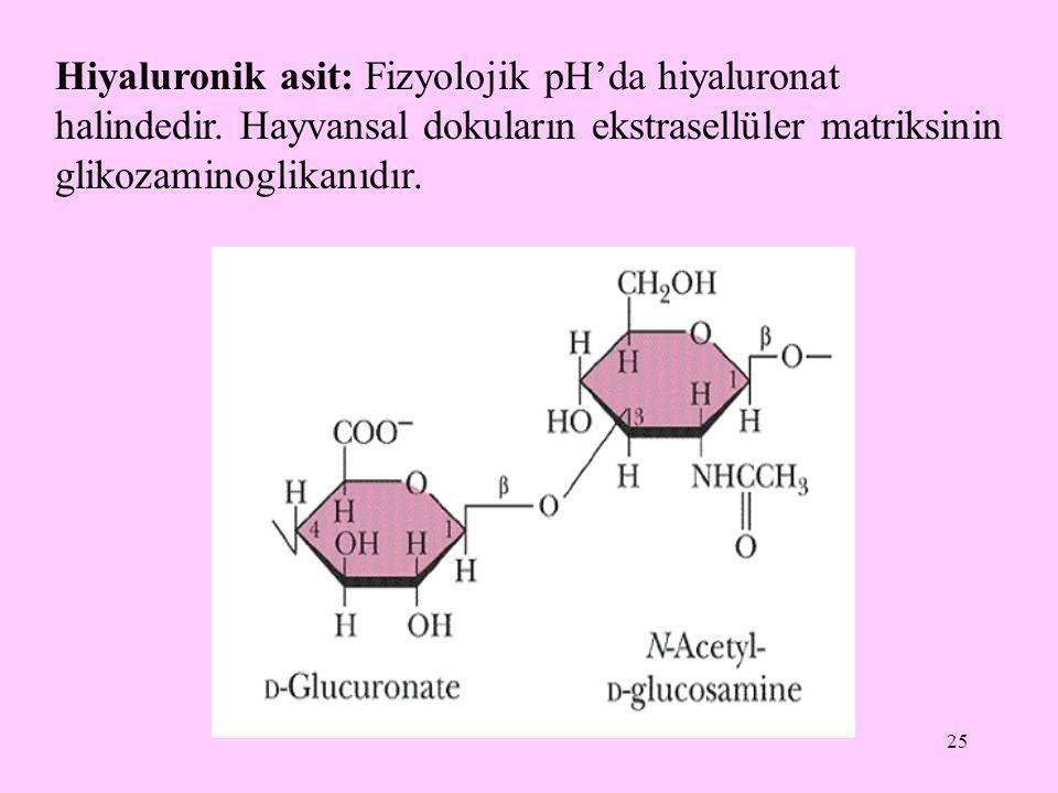 25 Hiyaluronik asit: Fizyolojik pH'da hiyaluronat halindedir. Hayvansal dokuların ekstrasellüler matriksinin glikozaminoglikanıdır.