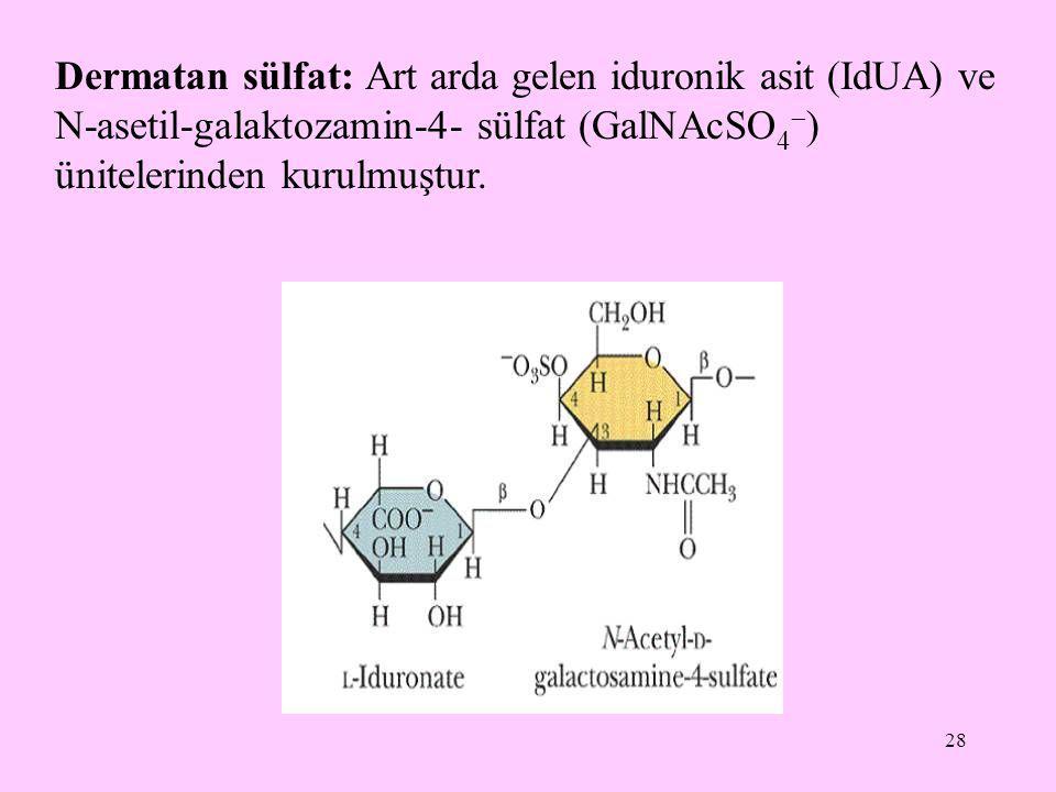 28 Dermatan sülfat: Art arda gelen iduronik asit (IdUA) ve N-asetil-galaktozamin-4- sülfat (GalNAcSO 4  ) ünitelerinden kurulmuştur.