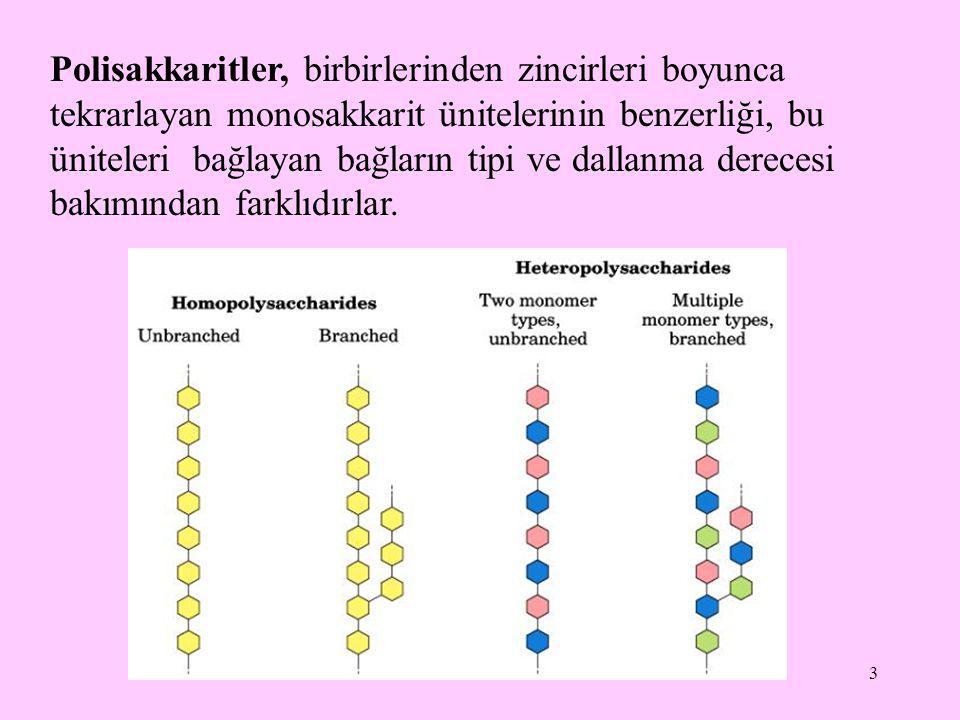 3 Polisakkaritler, birbirlerinden zincirleri boyunca tekrarlayan monosakkarit ünitelerinin benzerliği, bu üniteleri bağlayan bağların tipi ve dallanma derecesi bakımından farklıdırlar.