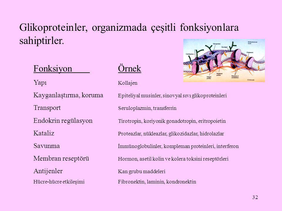 32 Glikoproteinler, organizmada çeşitli fonksiyonlara sahiptirler. FonksiyonÖrnek Yapı Kollajen Kayganlaştırma, koruma Epiteliyal musinler, sinovyal s