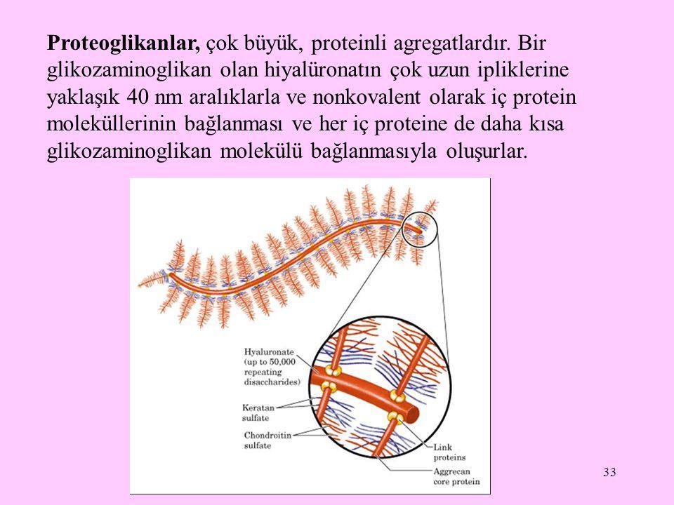 33 Proteoglikanlar, çok büyük, proteinli agregatlardır. Bir glikozaminoglikan olan hiyalüronatın çok uzun ipliklerine yaklaşık 40 nm aralıklarla ve no
