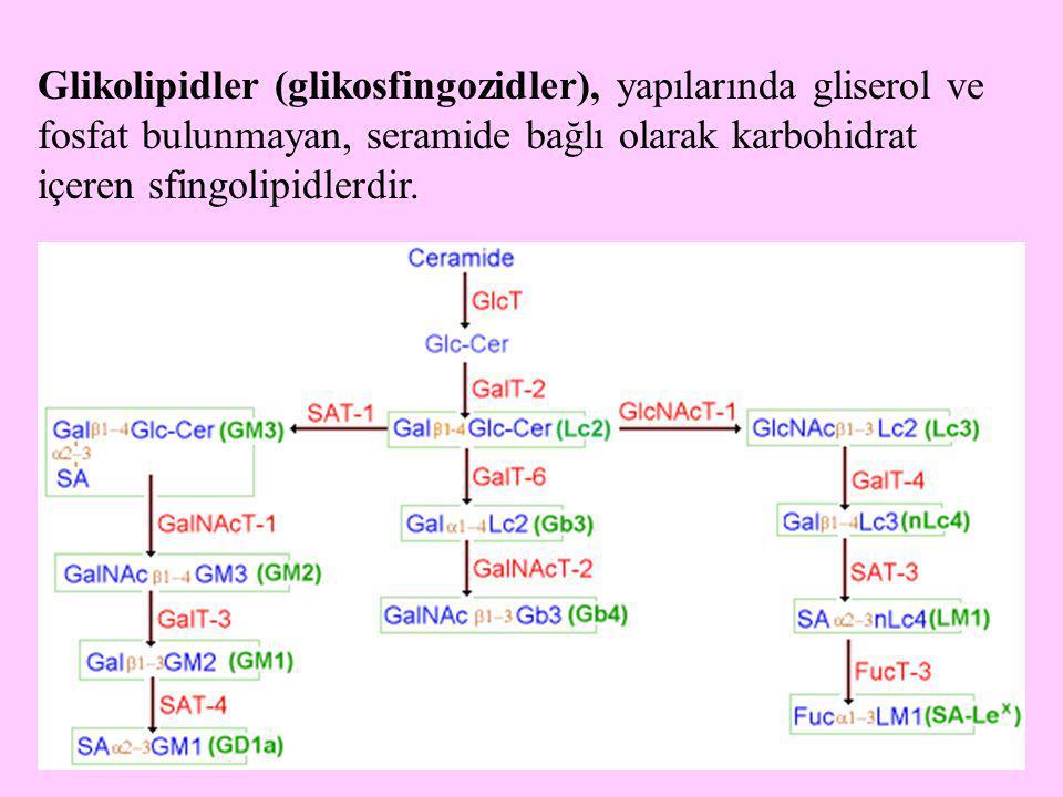 34 Glikolipidler (glikosfingozidler), yapılarında gliserol ve fosfat bulunmayan, seramide bağlı olarak karbohidrat içeren sfingolipidlerdir.