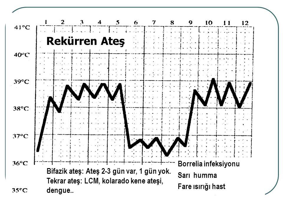 Borrelia infeksiyonu Sarı humma Fare ısırığı hast Bifazik ateş: Ateş 2-3 gün var, 1 gün yok. Tekrar ateş: LCM, kolarado kene ateşi, dengue.. Rekürren