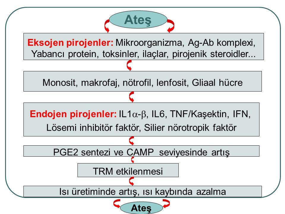 Eksojen pirojenler: Mikroorganizma, Ag-Ab komplexi, Yabancı protein, toksinler, ilaçlar, pirojenik steroidler... Monosit, makrofaj, nötrofil, lenfosit