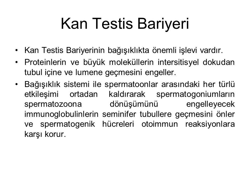 Kan Testis Bariyeri Kan Testis Bariyerinin bağışıklıkta önemli işlevi vardır. Proteinlerin ve büyük moleküllerin intersitisyel dokudan tubul içine ve