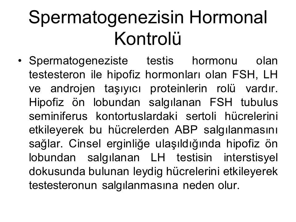 Spermatogenezisin Hormonal Kontrolü Spermatogeneziste testis hormonu olan testesteron ile hipofiz hormonları olan FSH, LH ve androjen taşıyıcı protein