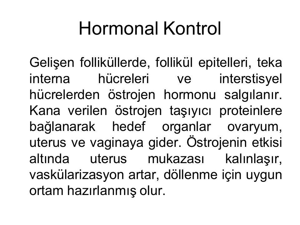 Hormonal Kontrol Gelişen folliküllerde, follikül epitelleri, teka interna hücreleri ve interstisyel hücrelerden östrojen hormonu salgılanır. Kana veri
