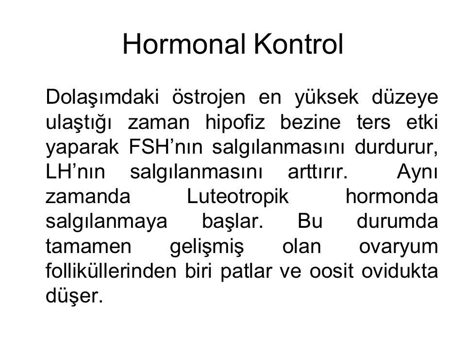 Hormonal Kontrol Dolaşımdaki östrojen en yüksek düzeye ulaştığı zaman hipofiz bezine ters etki yaparak FSH'nın salgılanmasını durdurur, LH'nın salgıla