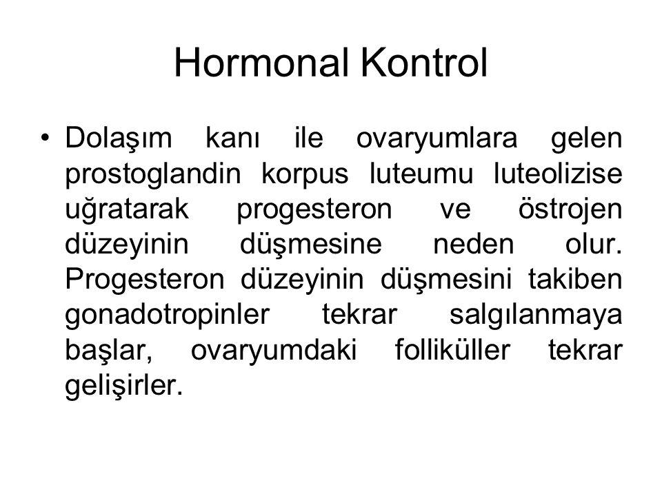 Hormonal Kontrol Dolaşım kanı ile ovaryumlara gelen prostoglandin korpus luteumu luteolizise uğratarak progesteron ve östrojen düzeyinin düşmesine ned