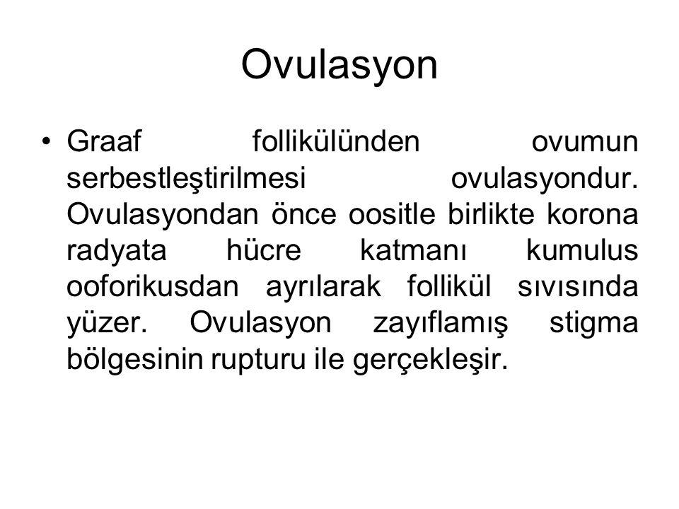 Ovulasyon Graaf follikülünden ovumun serbestleştirilmesi ovulasyondur. Ovulasyondan önce oositle birlikte korona radyata hücre katmanı kumulus ooforik