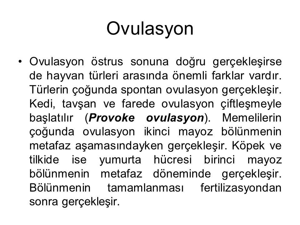 Ovulasyon Ovulasyon östrus sonuna doğru gerçekleşirse de hayvan türleri arasında önemli farklar vardır. Türlerin çoğunda spontan ovulasyon gerçekleşir