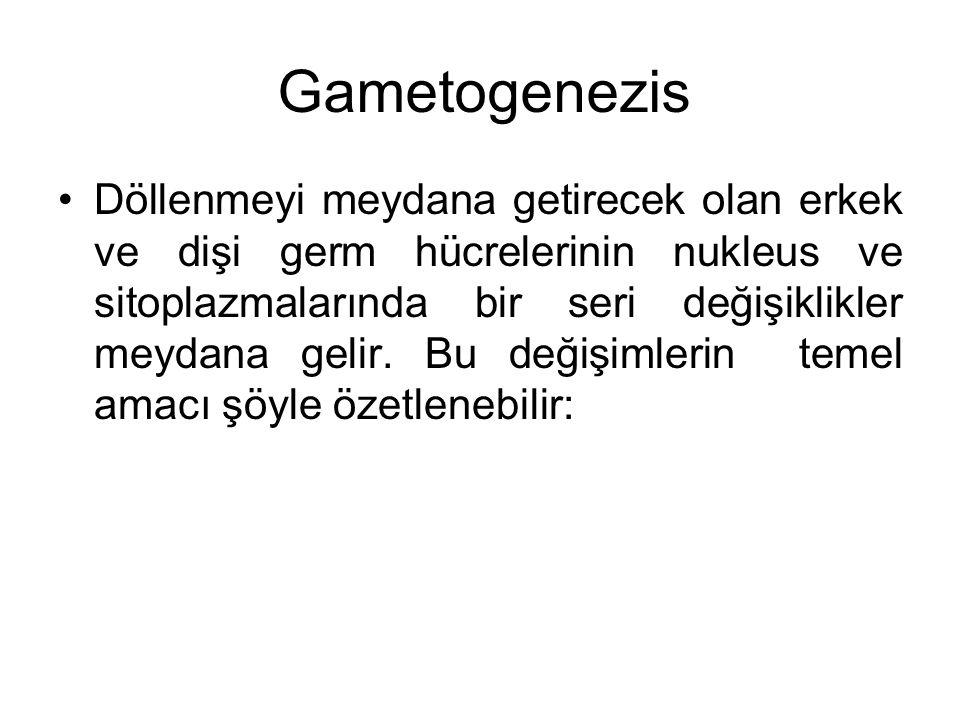 Gametogenezis Döllenmeyi meydana getirecek olan erkek ve dişi germ hücrelerinin nukleus ve sitoplazmalarında bir seri değişiklikler meydana gelir. Bu
