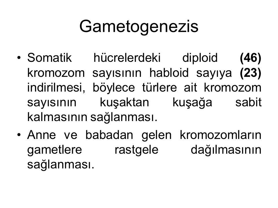 Gametogenezis Somatik hücrelerdeki diploid (46) kromozom sayısının habloid sayıya (23) indirilmesi, böylece türlere ait kromozom sayısının kuşaktan ku