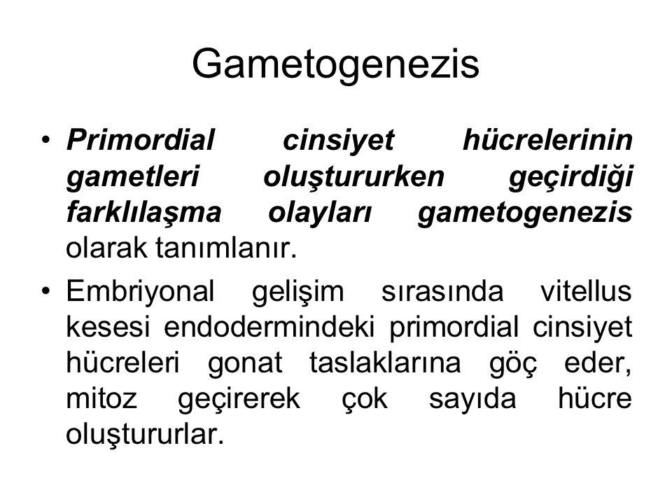 Gametogenezis Primordial cinsiyet hücrelerinin gametleri oluştururken geçirdiği farklılaşma olayları gametogenezis olarak tanımlanır. Embriyonal geliş