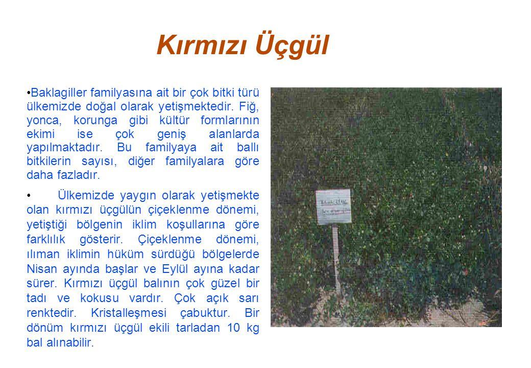 Kırmızı Üçgül Baklagiller familyasına ait bir çok bitki türü ülkemizde doğal olarak yetişmektedir.