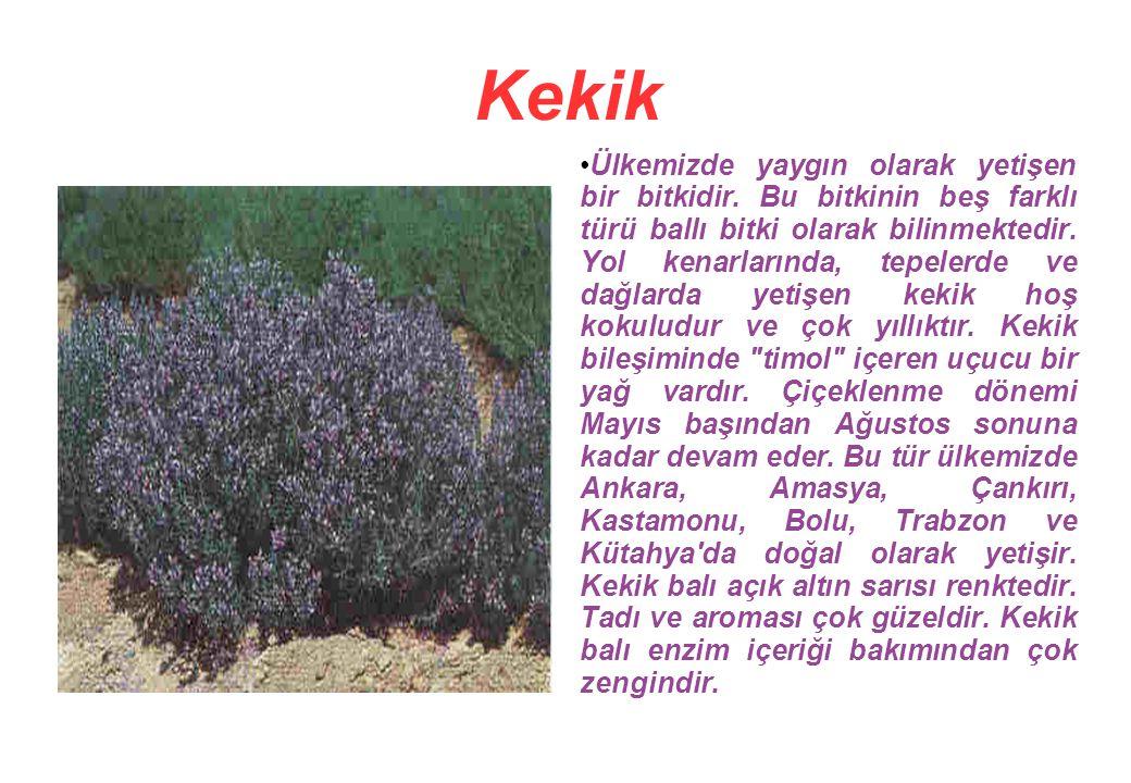 Kekik Ülkemizde yaygın olarak yetişen bir bitkidir.