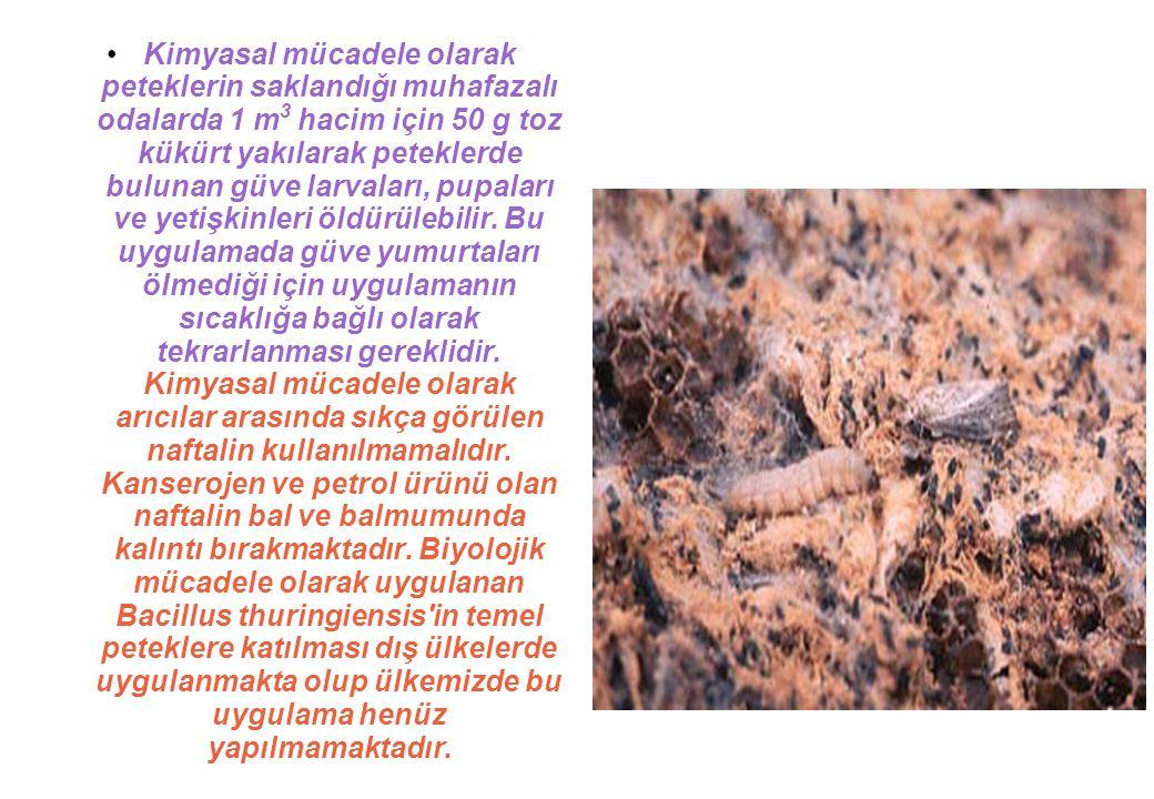 Kimyasal mücadele olarak peteklerin saklandığı muhafazalı odalarda 1 m 3 hacim için 50 g toz kükürt yakılarak peteklerde bulunan güve larvaları, pupaları ve yetişkinleri öldürülebilir.