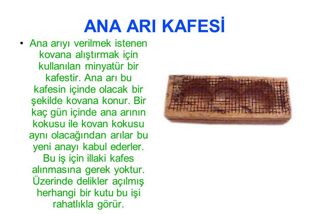 ANA ARI KAFESİ Ana arıyı verilmek istenen kovana alıştırmak için kullanılan minyatür bir kafestir.