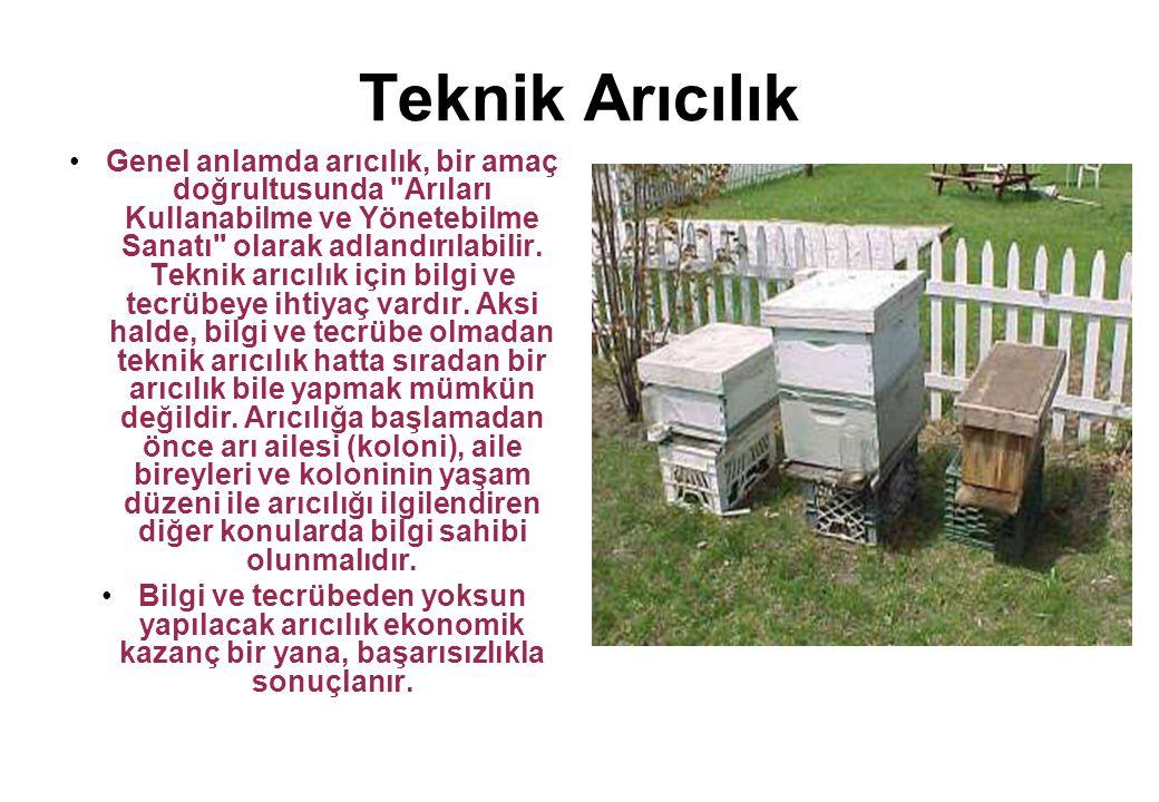 Teknik Arıcılık Genel anlamda arıcılık, bir amaç doğrultusunda Arıları Kullanabilme ve Yönetebilme Sanatı olarak adlandırılabilir.