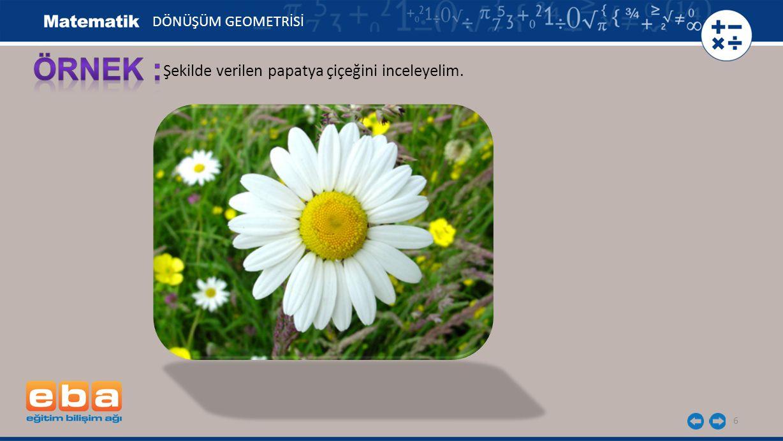 6 Şekilde verilen papatya çiçeğini inceleyelim. DÖNÜŞÜM GEOMETRİSİ