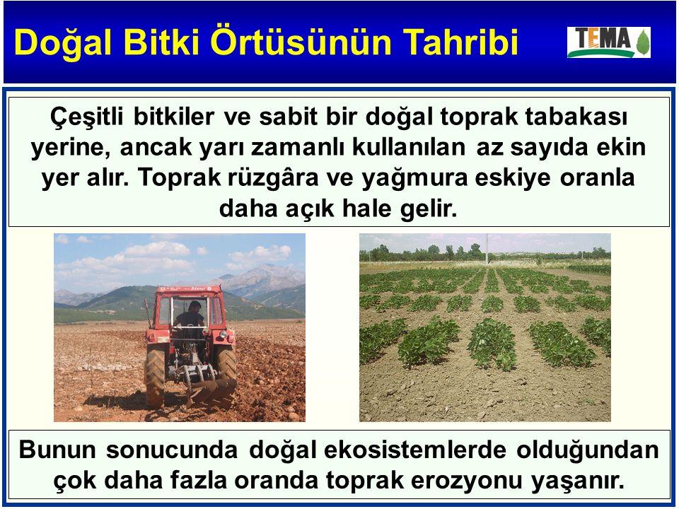 Çeşitli bitkiler ve sabit bir doğal toprak tabakası yerine, ancak yarı zamanlı kullanılan az sayıda ekin yer alır.