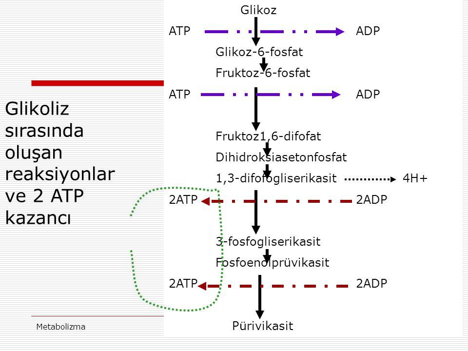 MetabolizmaProf Dr Ahmet ERGÜN16 Glikoz ATP ADP Glikoz-6-fosfat Fruktoz-6-fosfat ATP ADP Fruktoz1,6-difofat Dihidroksiasetonfosfat 1,3-difofogliserika