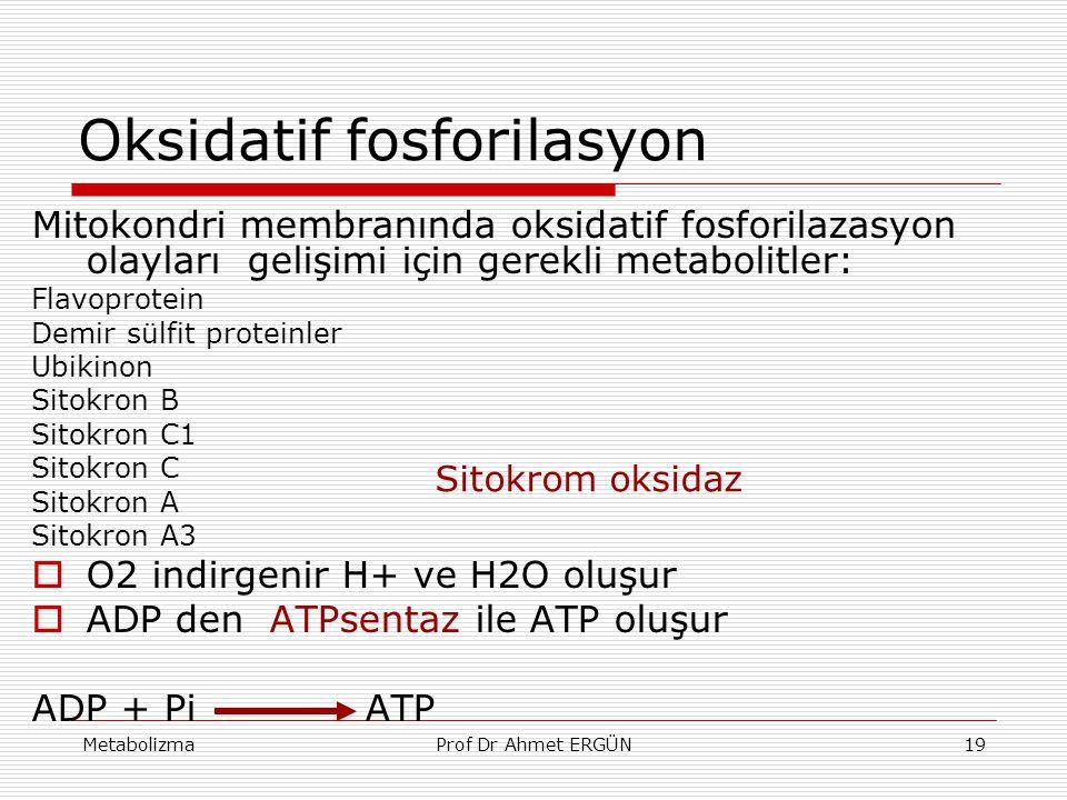 MetabolizmaProf Dr Ahmet ERGÜN19 Oksidatif fosforilasyon Mitokondri membranında oksidatif fosforilazasyon olayları gelişimi için gerekli metabolitler: