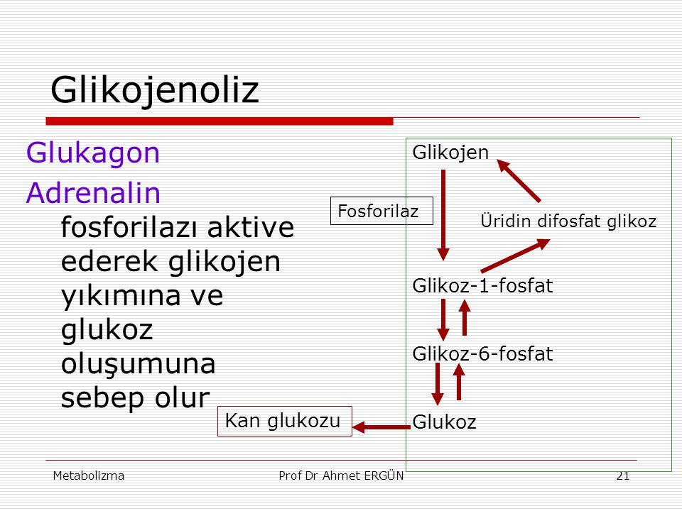 MetabolizmaProf Dr Ahmet ERGÜN21 Glikojenoliz Glukagon Adrenalin fosforilazı aktive ederek glikojen yıkımına ve glukoz oluşumuna sebep olur Glikojen Ü