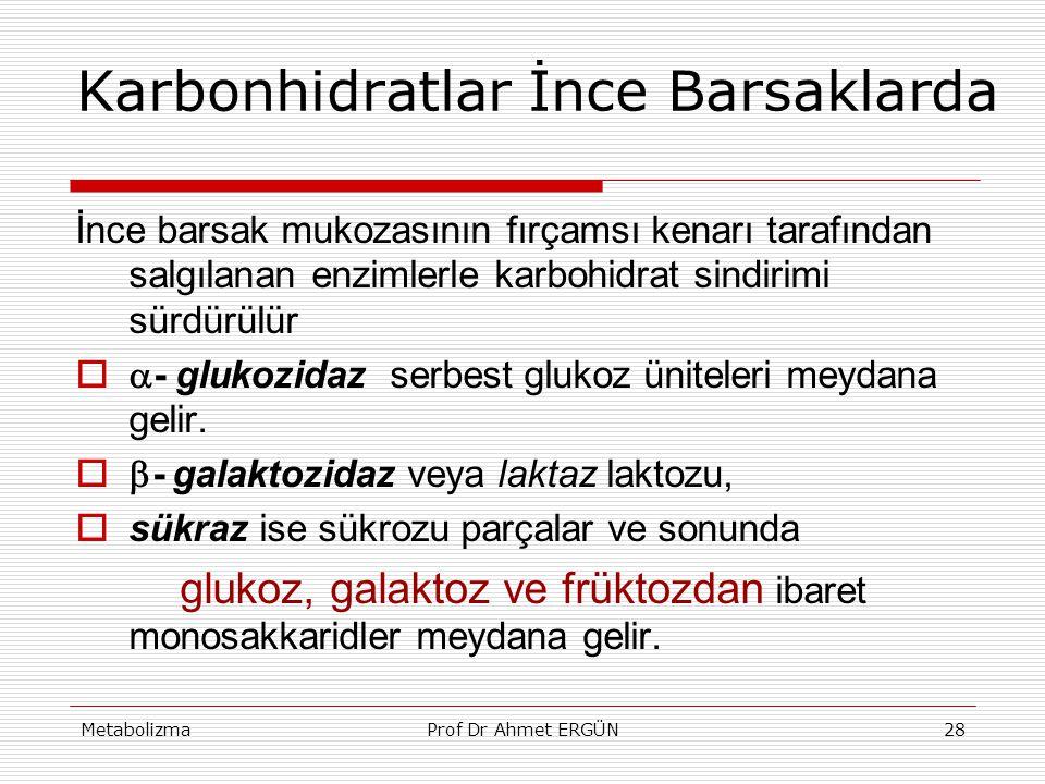 MetabolizmaProf Dr Ahmet ERGÜN28 Karbonhidratlar İnce Barsaklarda İnce barsak mukozasının fırçamsı kenarı tarafından salgılanan enzimlerle karbohidrat