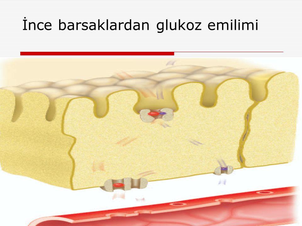 MetabolizmaProf Dr Ahmet ERGÜN32 İnce barsaklardan glukoz emilimi
