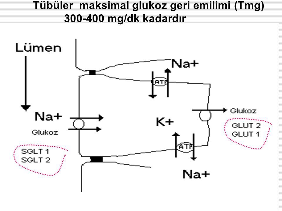 MetabolizmaProf Dr Ahmet ERGÜN33 Tübüler maksimal glukoz geri emilimi (Tmg) 300-400 mg/dk kadardır