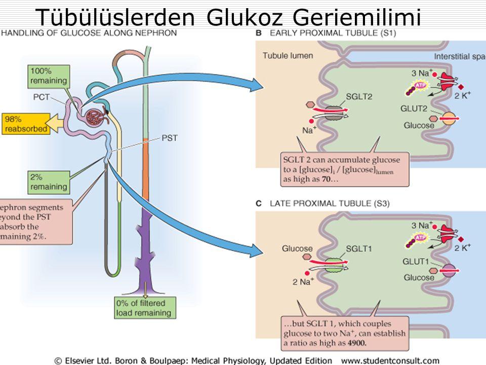 MetabolizmaProf Dr Ahmet ERGÜN34 Tübülüslerden Glukoz Geriemilimi