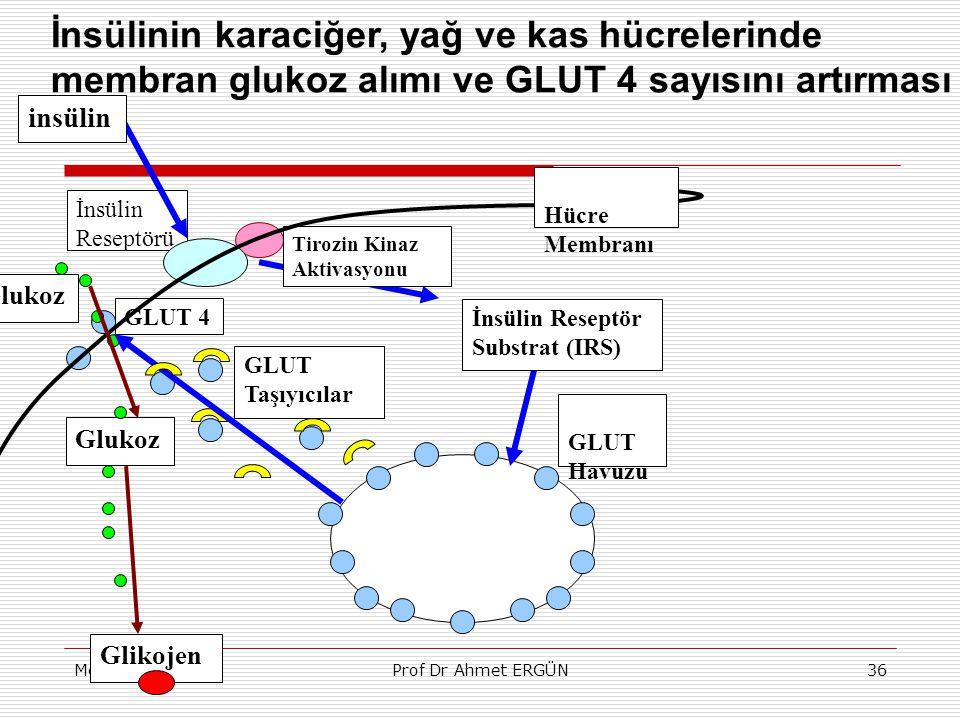 MetabolizmaProf Dr Ahmet ERGÜN36 İnsülin Reseptörü Tirozin Kinaz Aktivasyonu GLUT 4 GLUT Taşıyıcılar Glikojen Glukoz insülin GLUT Havuzu Glukoz İnsüli