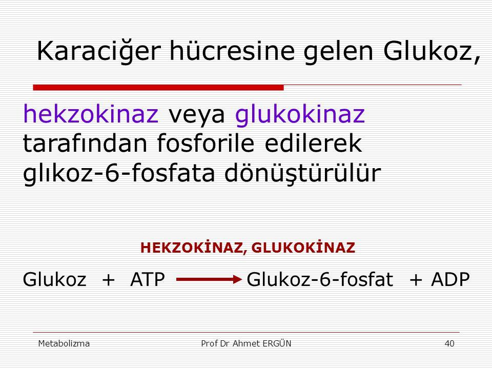 MetabolizmaProf Dr Ahmet ERGÜN40 Karaciğer hücresine gelen Glukoz, hekzokinaz veya glukokinaz tarafından fosforile edilerek glıkoz-6-fosfata dönüştürü
