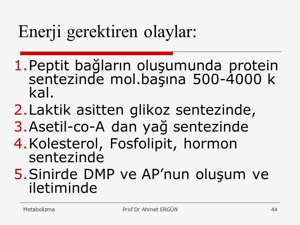 MetabolizmaProf Dr Ahmet ERGÜN44 Enerji gerektiren olaylar: 1.Peptit bağların oluşumunda protein sentezinde mol.başına 500-4000 k kal. 2.Laktik asitte