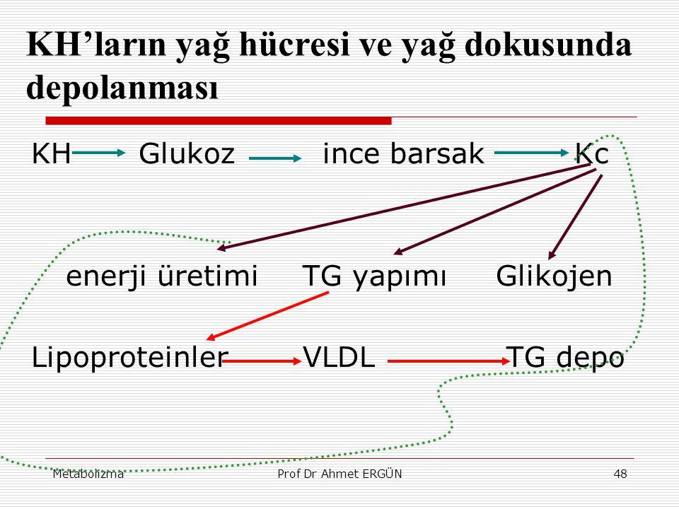MetabolizmaProf Dr Ahmet ERGÜN48 KH'ların yağ hücresi ve yağ dokusunda depolanması KH Glukoz ince barsak Kc enerji üretimiTG yapımı Glikojen Lipoprote