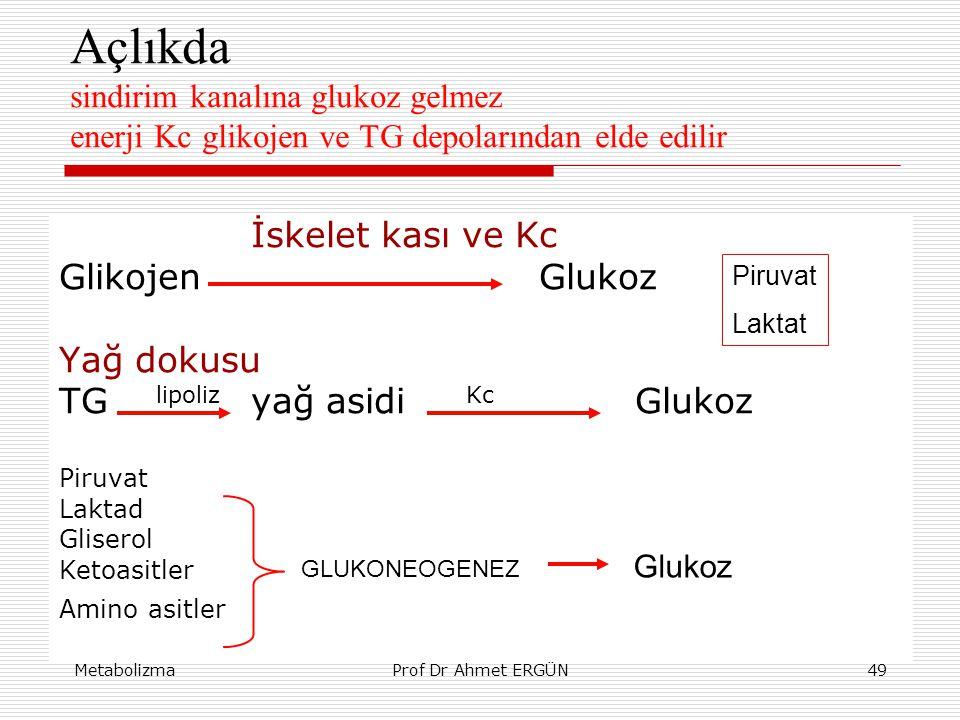 MetabolizmaProf Dr Ahmet ERGÜN49 Açlıkda sindirim kanalına glukoz gelmez enerji Kc glikojen ve TG depolarından elde edilir İskelet kası ve Kc Glikojen