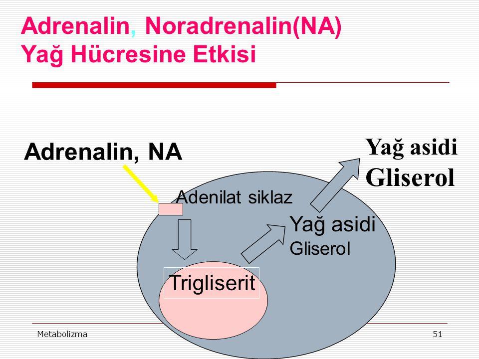 MetabolizmaProf Dr Ahmet ERGÜN51 Adrenalin, NA Adenilat siklaz Yağ asidi Gliserol Yağ asidi Gliserol Trigliserit Adrenalin, Noradrenalin(NA) Yağ Hücre