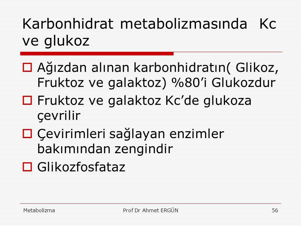 MetabolizmaProf Dr Ahmet ERGÜN56 Karbonhidrat metabolizmasında Kc ve glukoz  Ağızdan alınan karbonhidratın( Glikoz, Fruktoz ve galaktoz) %80'i Glukoz