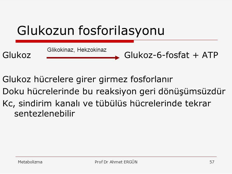MetabolizmaProf Dr Ahmet ERGÜN57 Glukozun fosforilasyonu Glukoz Glukoz-6-fosfat + ATP Glukoz hücrelere girer girmez fosforlanır Doku hücrelerinde bu r