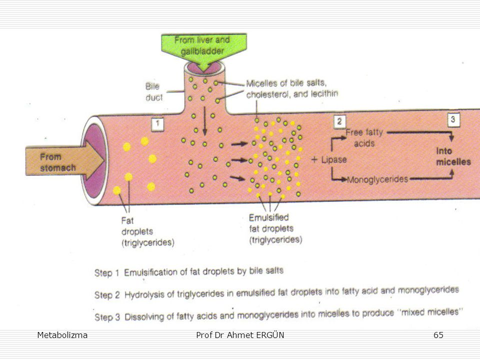 MetabolizmaProf Dr Ahmet ERGÜN65