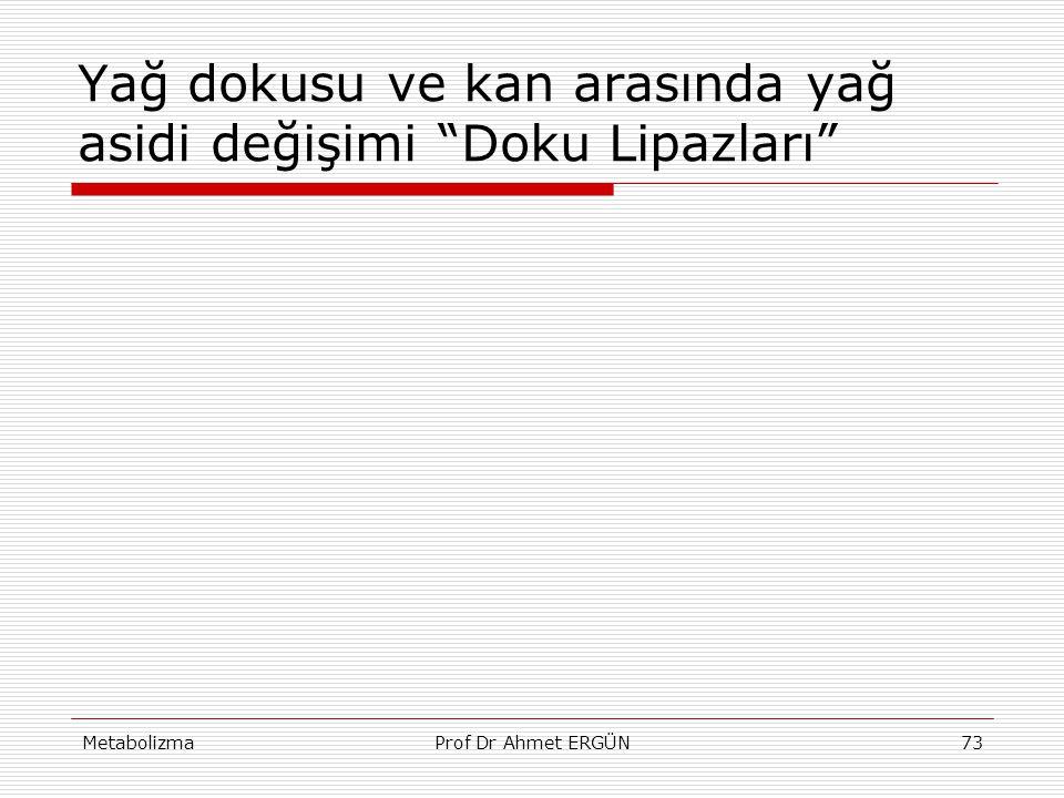 """MetabolizmaProf Dr Ahmet ERGÜN73 Yağ dokusu ve kan arasında yağ asidi değişimi """"Doku Lipazları"""""""