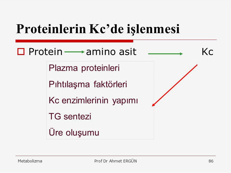 MetabolizmaProf Dr Ahmet ERGÜN86 Proteinlerin Kc'de işlenmesi  Protein amino asitKc Plazma proteinleri Pıhtılaşma faktörleri Kc enzimlerinin yapımı T