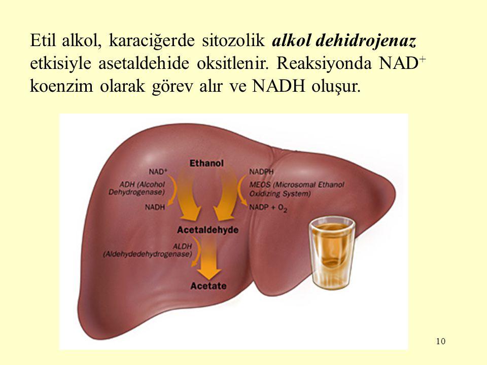 10 Etil alkol, karaciğerde sitozolik alkol dehidrojenaz etkisiyle asetaldehide oksitlenir. Reaksiyonda NAD + koenzim olarak görev alır ve NADH oluşur.