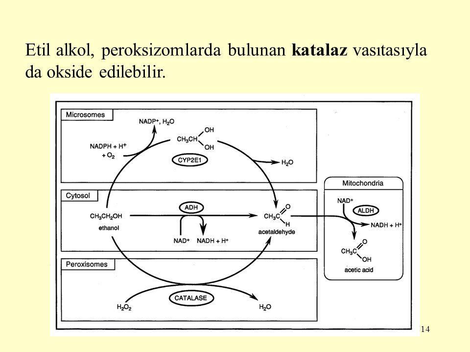 14 Etil alkol, peroksizomlarda bulunan katalaz vasıtasıyla da okside edilebilir.